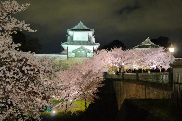 金沢城公園夜桜