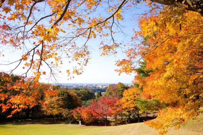 卯辰山公園紅葉