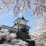 金沢城サクラ